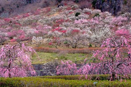 早春の花の名所